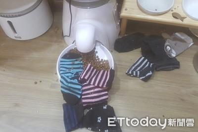怪貓天天「吃飯配原汁襪」墊便當