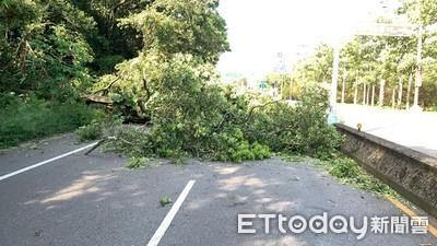 利奇馬過境路樹倒塌 警排除路障