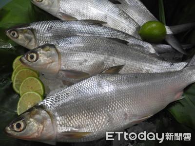 虱目魚全身都是寶!年產值破41億