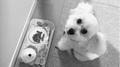 毛小孩是家人!日本養寵物前要簽「保證書」:發誓照顧牠們一輩子