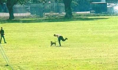 中二男沒事飛踢狗狗 全英國憤怒肉搜