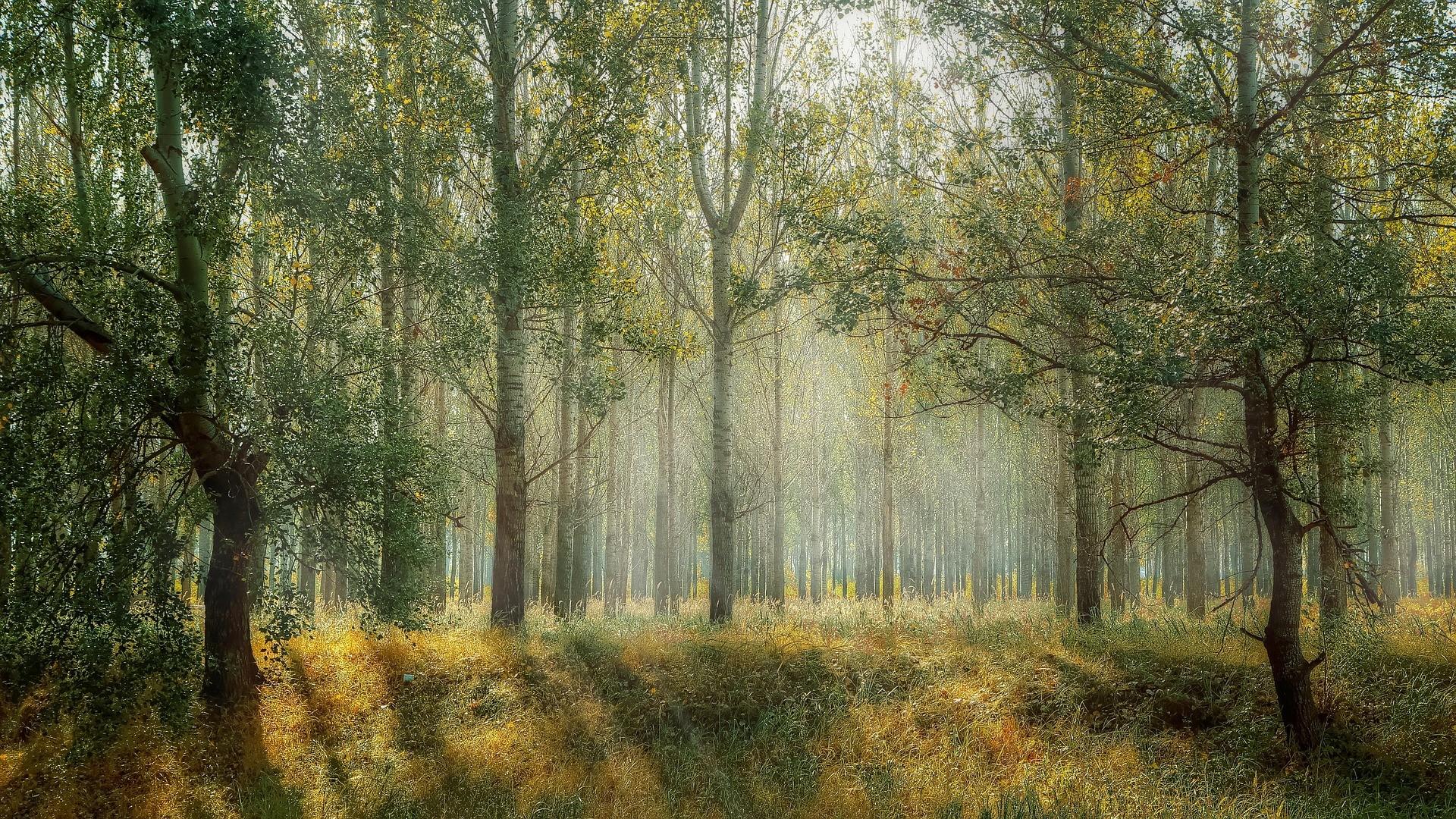▲▼森林。(圖/取自免費圖庫Pixabay)