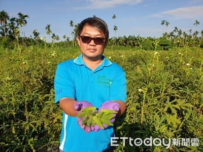 7年級化工廠技術師 轉型種有機秋葵