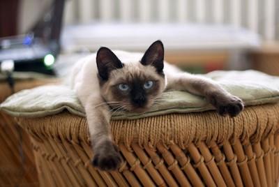 貓主子其實沒那麼想你!等門迎接貓奴回家 其實是在期待好康
