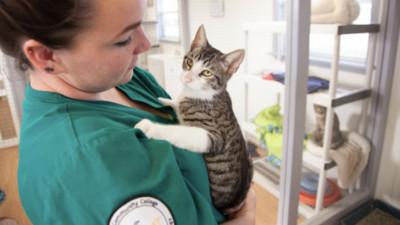 貓過敏疫苗研發成功!瘋狂吸貓不打噴嚏 喵皇:等等為何打針的是我?