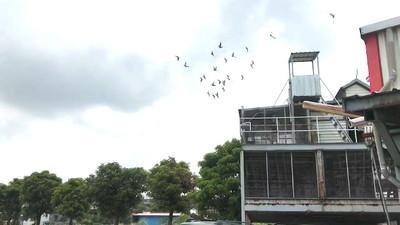 賽鴿會長遭綁付500萬贖金獲釋