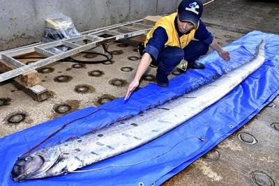 日本研究:深海魚和大地震嘸關係