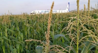 客機遭鳥擊迫降抵達玉米田23人傷