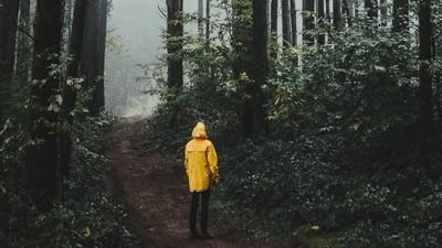 「玉山小飛俠」排雲山莊詭譎指路…登山客:跟著祂們走會出事