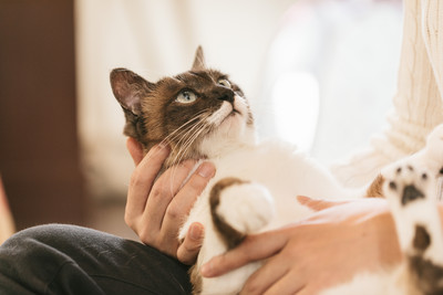 寵物保險再進化!毛小孩「門診+手術+住院」全保障