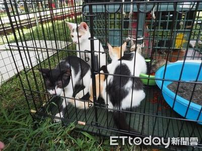 「阿尼基的貓」17日供認養 台東收容人含淚送出門