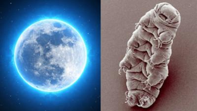 水熊蟲被丟到月球上 「假死中」待未來喚醒 網:月球要被統治了嗎?
