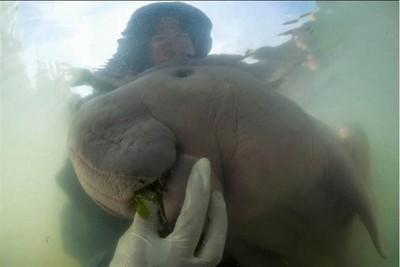 美人魚網紅被塑膠垃圾阻塞胃死亡