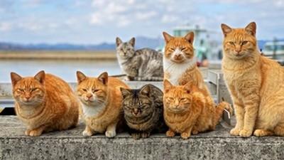 去趟沖繩發現貓好多!攝影師一招讓喵皇乖乖入鏡:左手貓糧右手快門