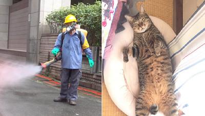 登革熱噴藥成分對貓咪是劇毒!