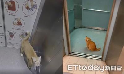 遇警衛貓夜間巡邏!住戶陪搭電梯