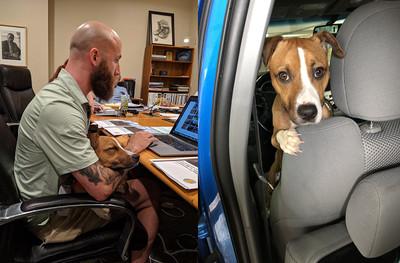 才考慮養狗!他上班前巧遇自來汪