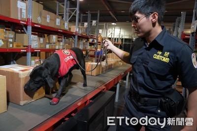海關除役犬 擴大認養家庭範圍