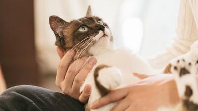貓毛不會讓人過敏!專家證實元凶是「皮屑和口水」 把阿喵剃光也沒用
