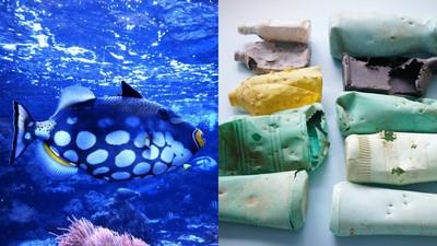 淨灘發現垃圾有「神秘咬痕」!一查才知不是狗咬的 海魚無辜吃塑膠
