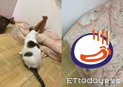 3貓床上神秘儀式 她一看棉被崩潰