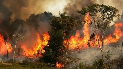 光今年就燒了7萬次!潮濕的「地球之肺」亞馬遜異常失火 有人在乎嗎?
