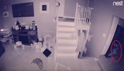 寵物監視器拍到白影 網:有人過世?