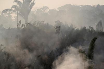 亞馬遜狂燒 網貝佐斯捐款救災