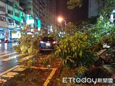 白鹿侵襲台南路樹吹倒壓到小客車