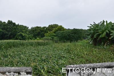 颱風一掃東台灣農損6626萬