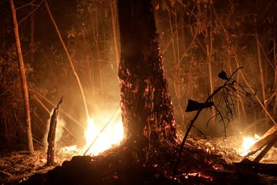 亞馬遜大火狂燒竟與貿易戰有關