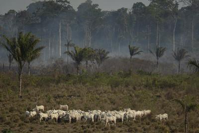 G7捐6億「金援亞馬遜滅火」巴西總統不領情
