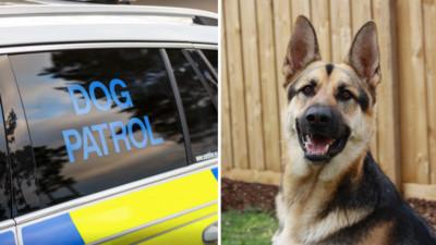 警犬被活活熱死!午後高溫獨留警車內 熱感應器故障造成遺憾