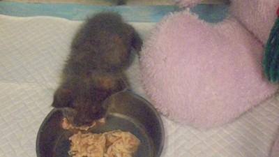 小藍貓因病遭二次棄養 高雄獸醫專收病毛孩:醫好就會有人養了