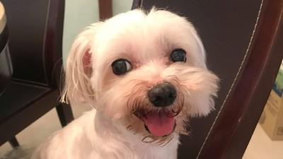 女遭男友狠甩爆哭 毛孩默默看在眼裡 寵物溝通師:牠希望妳開心