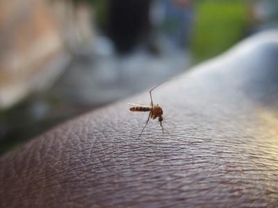 媽被蚊子叮險截肢 心臟停3分鐘