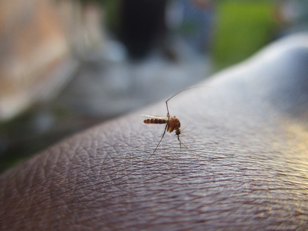 汗臭人完蛋了!醫曝蚊子最愛「3獵物體質」逃不過:跟吃肉、吃素沒有關係