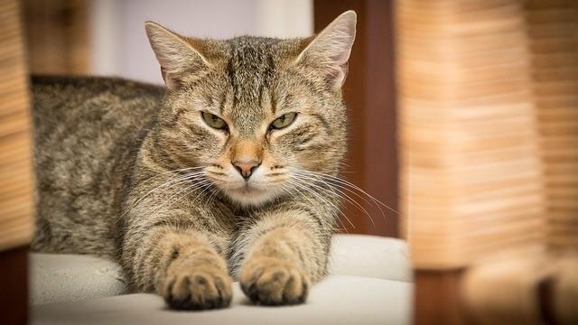 傲嬌貓(圖/取自免費圖庫pixabay)