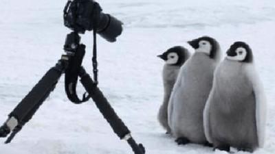 超沒戒心!南極攝影師都知道:架好相機,傻萌企鵝就會走過來