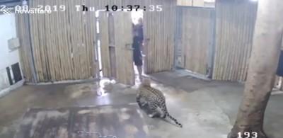 遊泰動物園亂開門 童遭豹咬爛臉