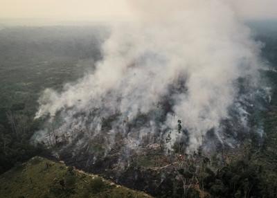 巴西總統怒轟「誰說亞馬遜是地球之肺?」