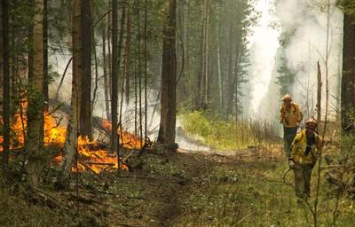西伯利亞野火 燒毀40萬公頃林地
