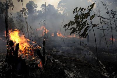 亞馬遜大火狂燒 復原要花150年!