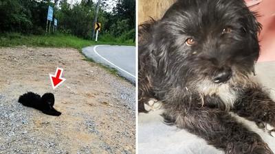 趴在「遭棄養地點」傻信原飼主會回來 小黑狗遠走21公里沒吃沒喝