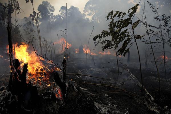 地球之肺:亚马逊雨林或在20-30年后消失