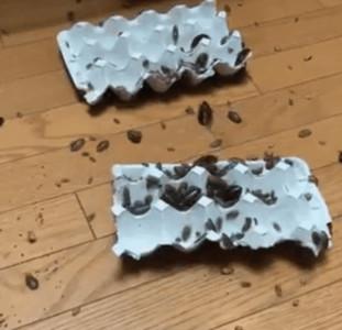 日本飼主養爬蟲類崩潰影片網瘋傳