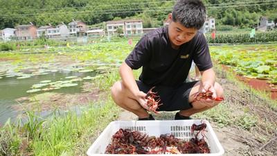 狂繁殖毀生態!「小龍蝦」入侵中國被吃光 上兆商機讓非洲發大財
