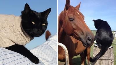 走進收容所「黑貓盯著我」!馬場女主人帶浪貓回家,跨物種友情逼哭她