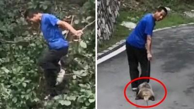 踹死動物「笑著拖屍離開」!動物園草叢邊殘忍殺生 全被遊客偷偷錄下