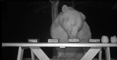 養蜂場被熊入侵 他轉念竟帶來商機